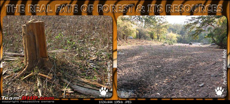 Please Help in Saving AP's Forests and Wildlife-forestreal.jpg
