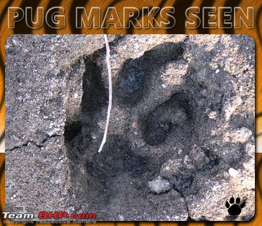 Name:  pugmarks02.jpg Views: 418 Size:  104.3 KB