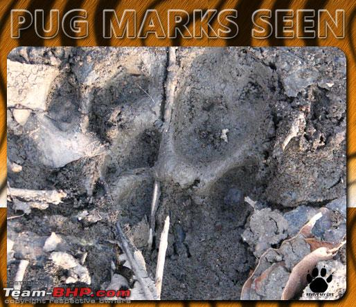 Name:  pugmarks12.jpg Views: 306 Size:  96.3 KB