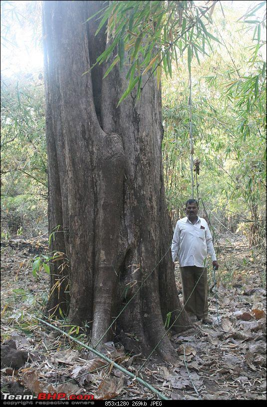 Please Help in Saving AP's Forests and Wildlife-img_0409.jpg