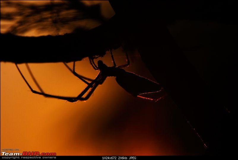 The Official non-auto Image thread-spiderbacklit.jpg