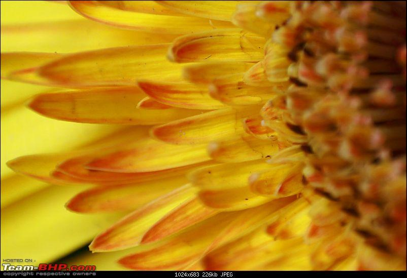 The Official non-auto Image thread-yellow-flower.jpg