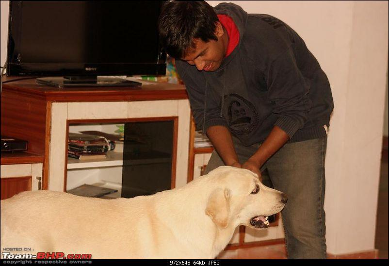Team-BHPians and their Pets-img_4071.jpg