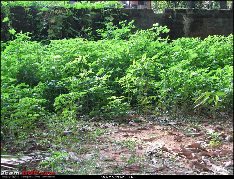 Weeds - How do you tackle them? Pls provide your suggestion-p1.jpg
