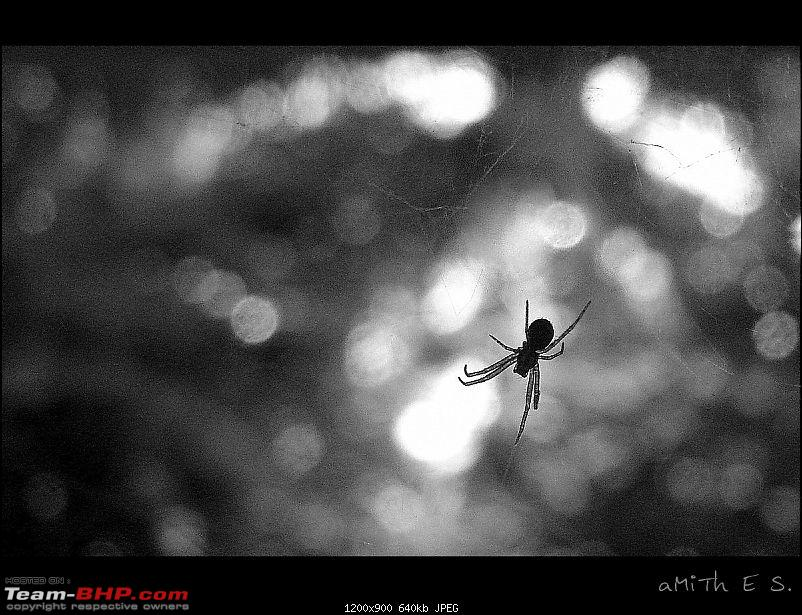 The Official non-auto Image thread-spider_black-white_amith_es.jpg