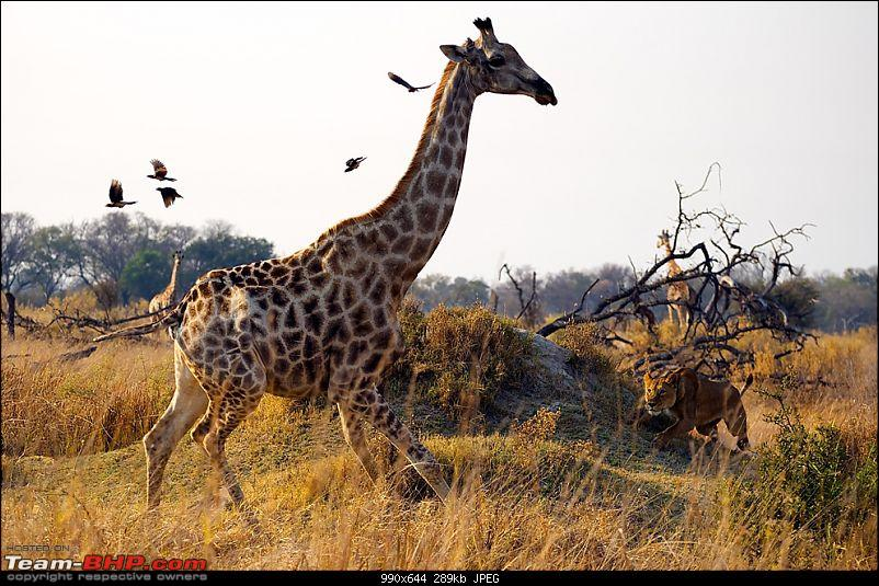 Enter,National Geographic 'Photograph of the Year' contest 2010-n01_alextan.jpg