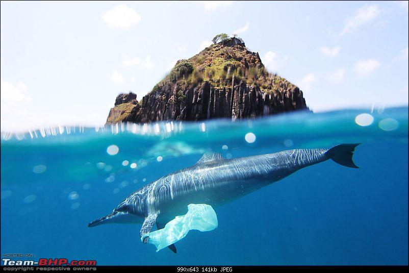 Enter,National Geographic 'Photograph of the Year' contest 2010-n11_joaovianna.jpg