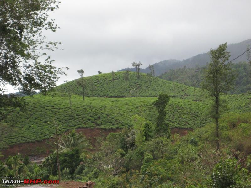 Name:  tea estate.JPG