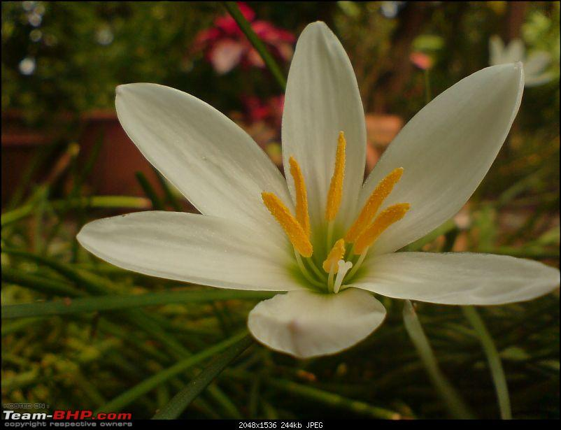 The Official non-auto Image thread-tpvn-flowermacro.jpg