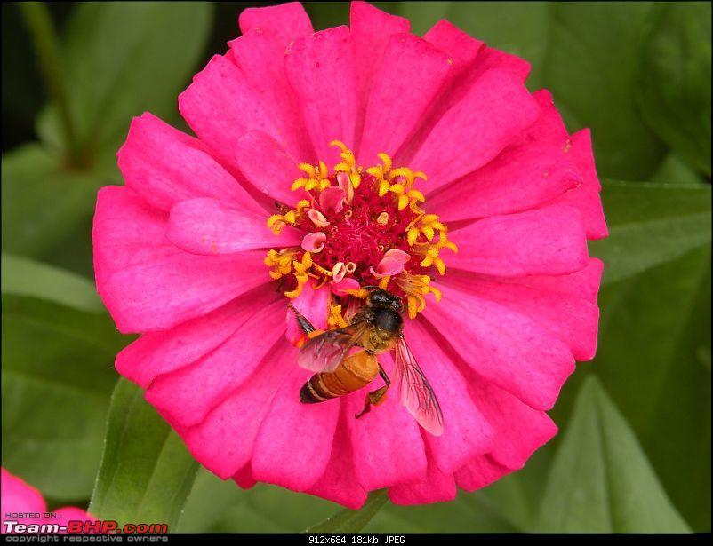 Lalbagh Flower Show - Bangalore-dscn0067.jpg