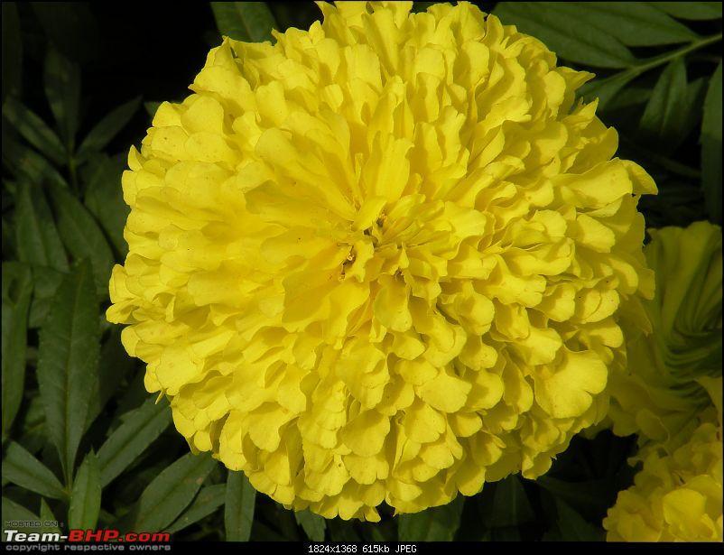 Lalbagh Flower Show - Bangalore-dscn0030.jpg