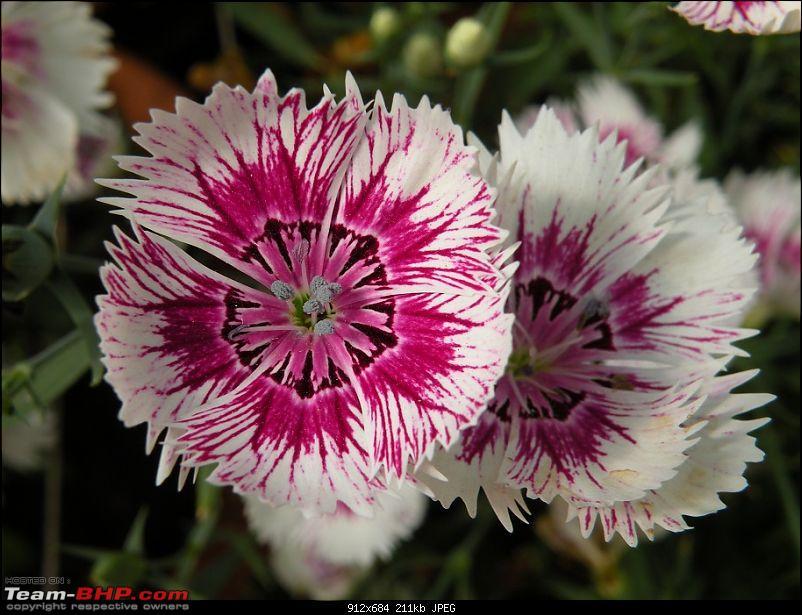 Lalbagh Flower Show - Bangalore-dscn0051.jpg