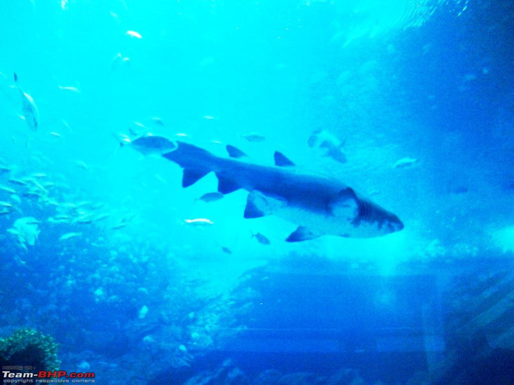 The Dubai Mall Aquarium and