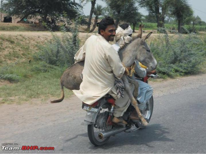 Name:  donkey.jpg Views: 1686 Size:  70.0 KB