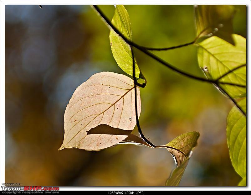 The Official non-auto Image thread-leaf_small.jpg