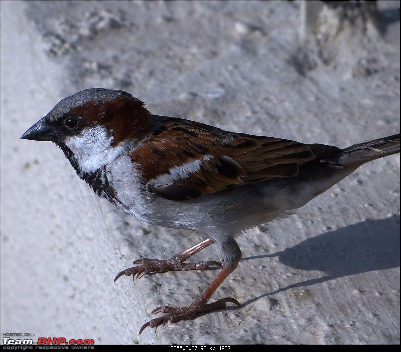 The Official non-auto Image thread-sparrow.jpg