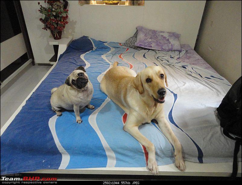 Team-BHPians and their Pets-dsc01889.jpg