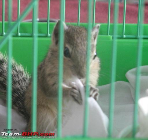 Name:  CBE_Squirrel_02.JPG Views: 677 Size:  178.3 KB