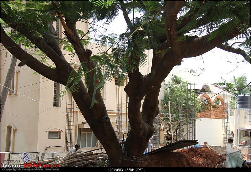 Saving a magnificient tree in my neighbourhood-img_0942.jpg