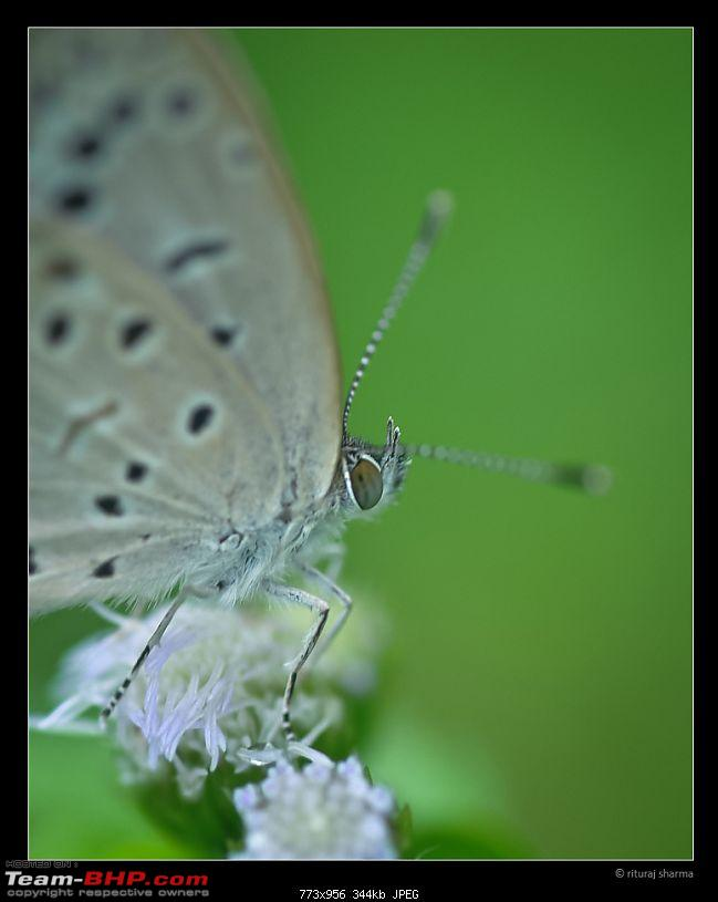 The Official non-auto Image thread-butterfly-supermacro.jpg