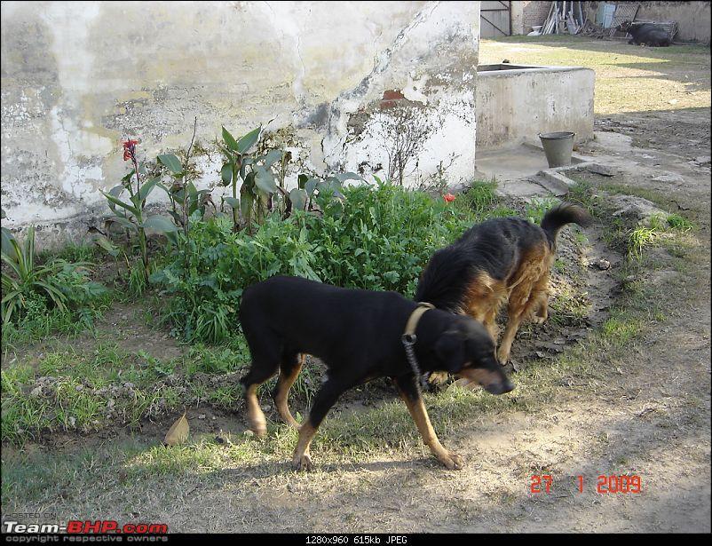 Team-BHPians and their Pets-dsc01424.jpg