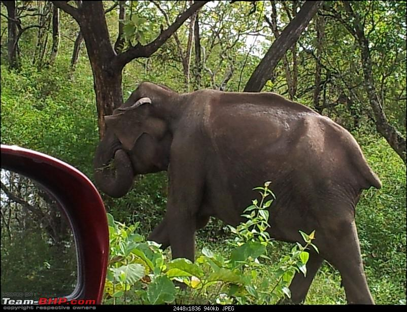 Elephant Attack in the Bandipur Forest area?-20121022_091210.jpg