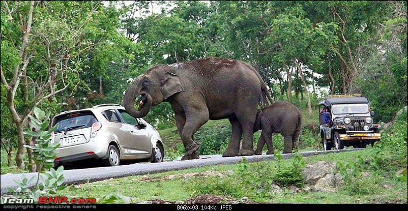 Elephant Attack in the Bandipur Forest area?-11357301_1004059209604698_2998167785980093271_o.jpg