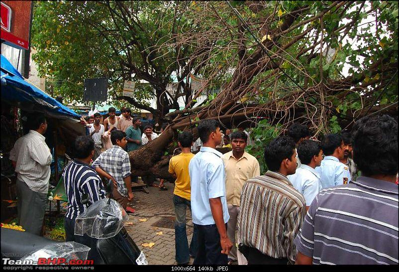 A near miss - Tree almost falls on a Santro (not my car, I was merely a bystander)-dsc_0302_thumb.jpg