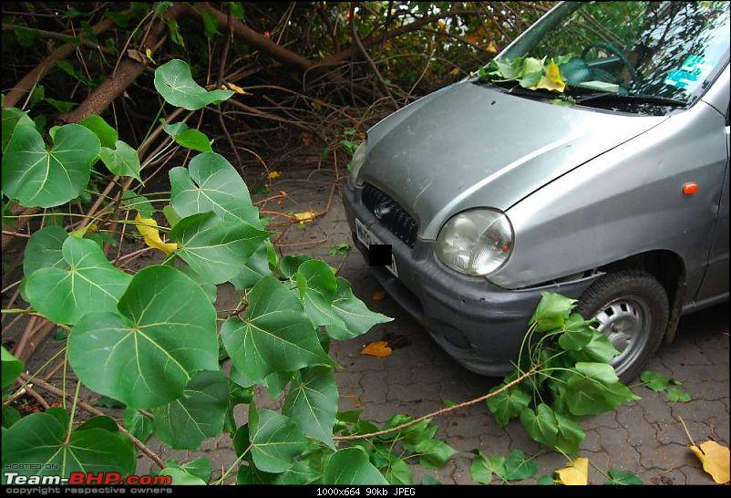 A near miss - Tree almost falls on a Santro (not my car, I was merely a bystander)-dsc_03042_thumb.jpg