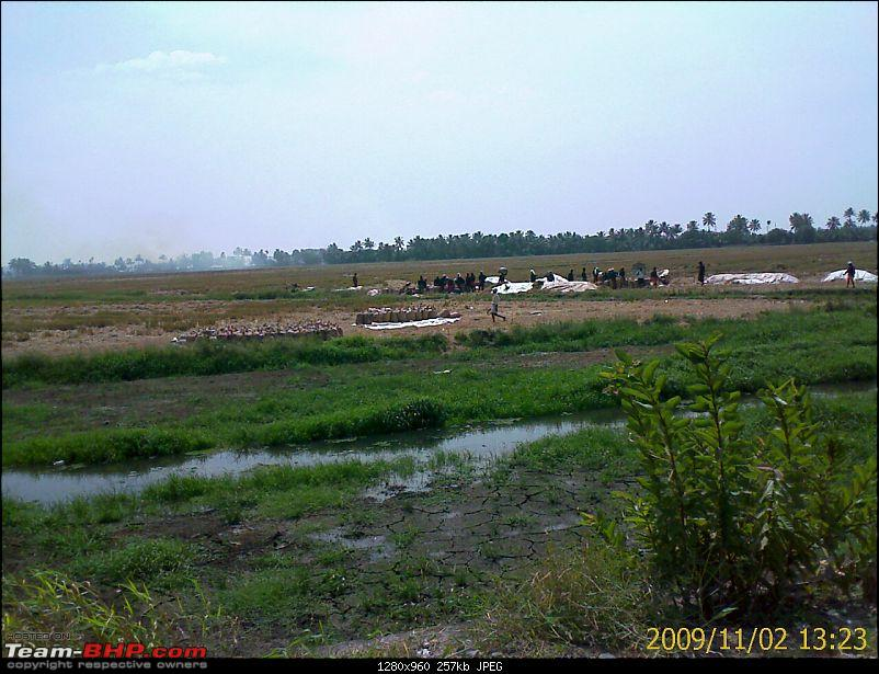Phases of agriculture in Kuttanad-image_425.jpg