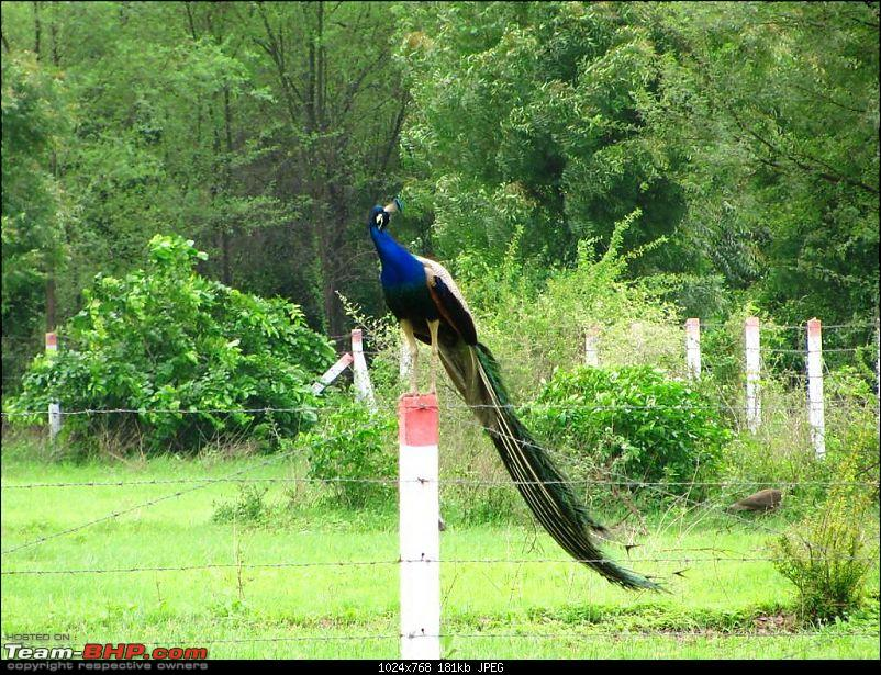Birds on the Highway-picture-059-large.jpg