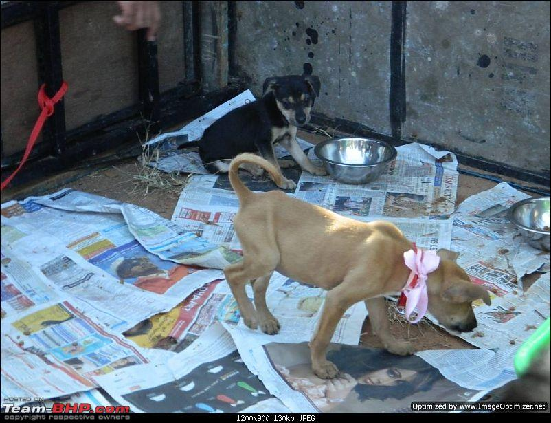Rescued a street dog after a crash-Need Suggestions-dscn2197optimized.jpg