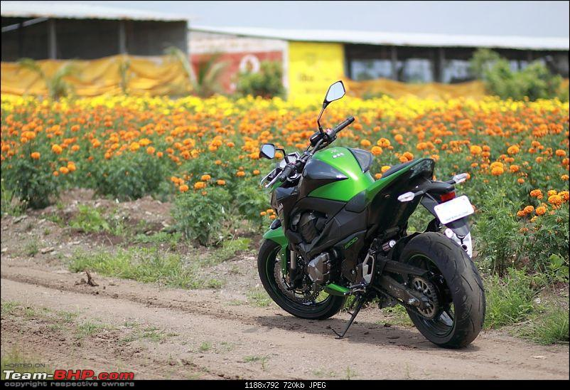 My Mean Green 2015 Kawasaki Z800-img_0898.jpg
