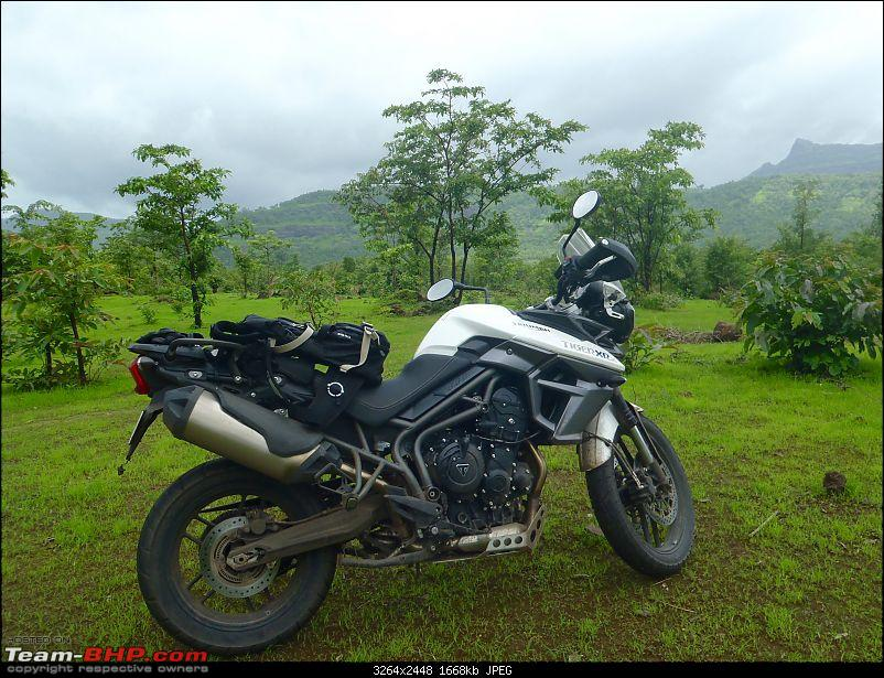 Triumph Tiger XRx : 6000 km ownership review!-tiger-wilderness-1-1.jpg
