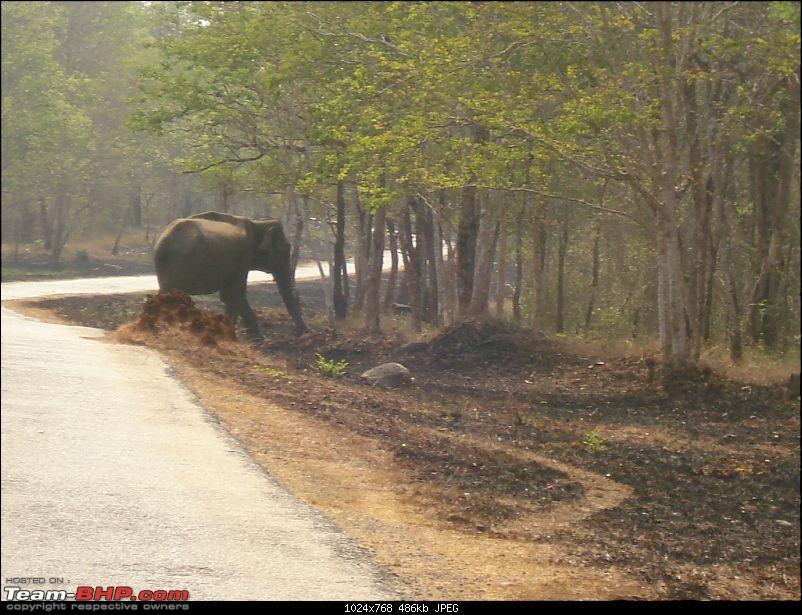 Report : Bangalore Buddy's meet - 27/28 March - Nagarhole-dsc03595.jpg