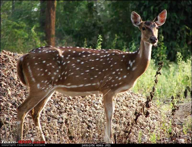 Report : Bangalore Buddy's meet - 27/28 March - Nagarhole-dsc03675.jpg
