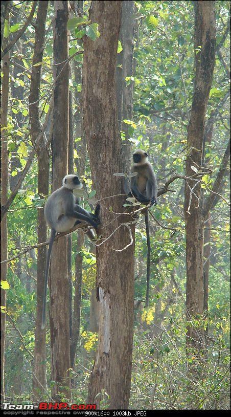 Report : Bangalore Buddy's meet - 27/28 March - Nagarhole-dsc03133_1600x900.jpg