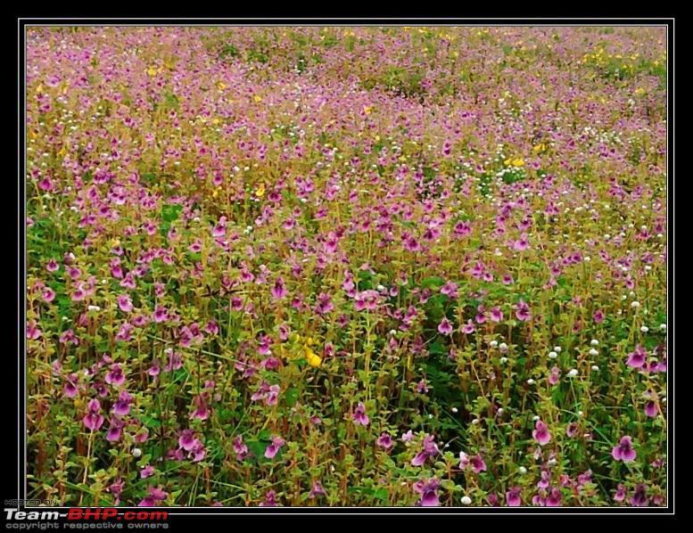 Name:  kaas_flowers1.jpg Views: 1075 Size:  274.8 KB