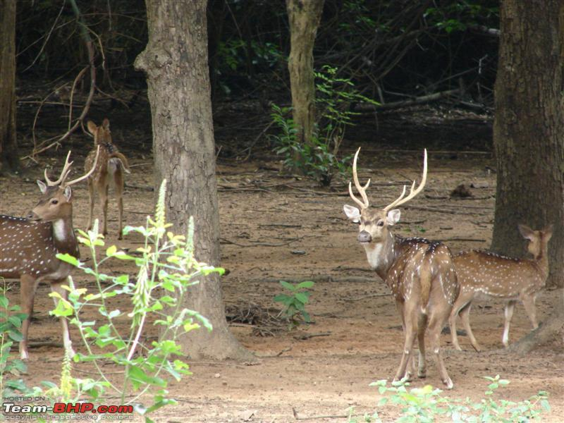 Name:  Deer.JPG