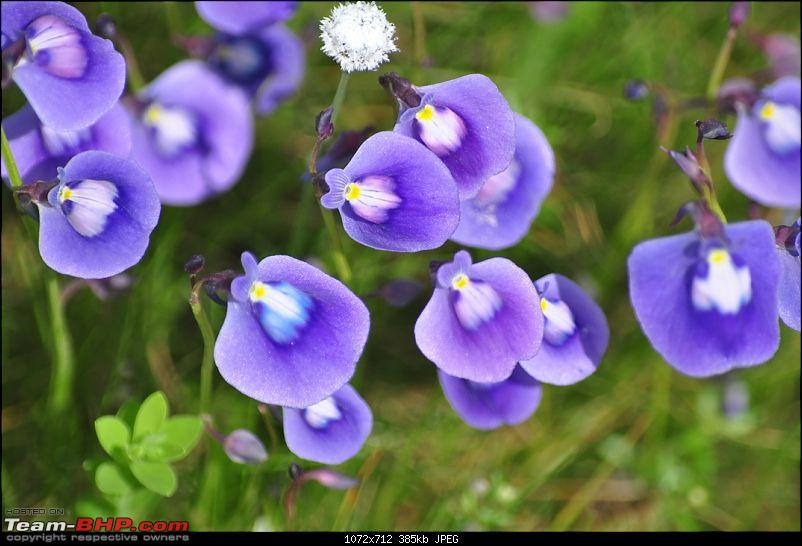 2012 Annual Drive and Meet: Kaas Valley of Flowers-dsc_0068.jpg