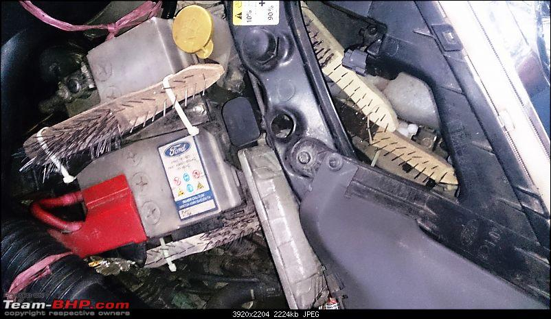How do you protect your car from rats?-07-engine-bay-1.jpg
