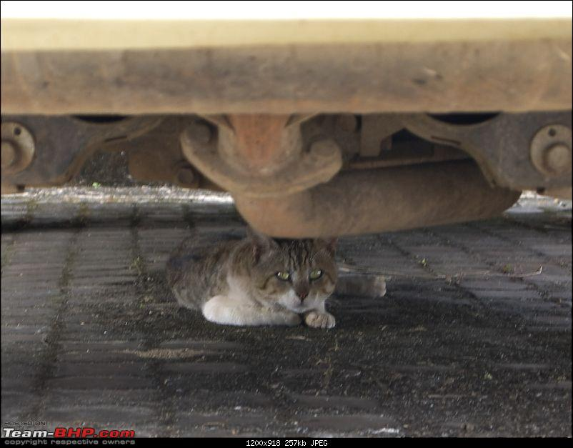 How do you protect your car from rats?-pb281338.jpg