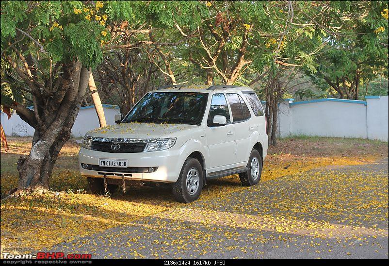 Tale of a Tata Safari Storme EX. EDIT: 20,000 km update-flowers.jpg