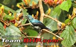 Name:  bird 1a.JPG Views: 2271 Size:  52.1 KB