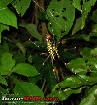 Name:  Spider.JPG Views: 2211 Size:  70.5 KB