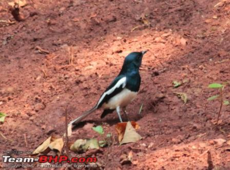 Name:  bird 2a.JPG