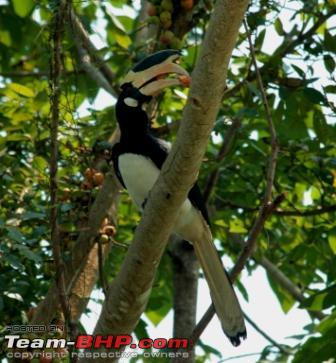 Name:  hornbill 1.JPG Views: 2272 Size:  44.9 KB