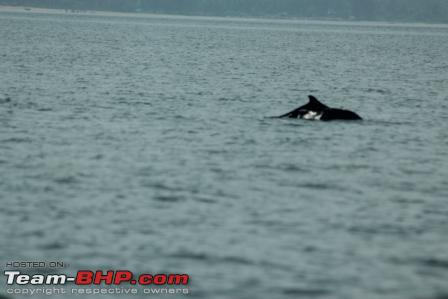 Name:  dolphin.JPG