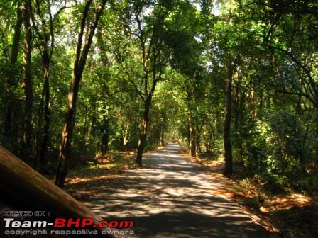 Name:  Yana forest road.JPG