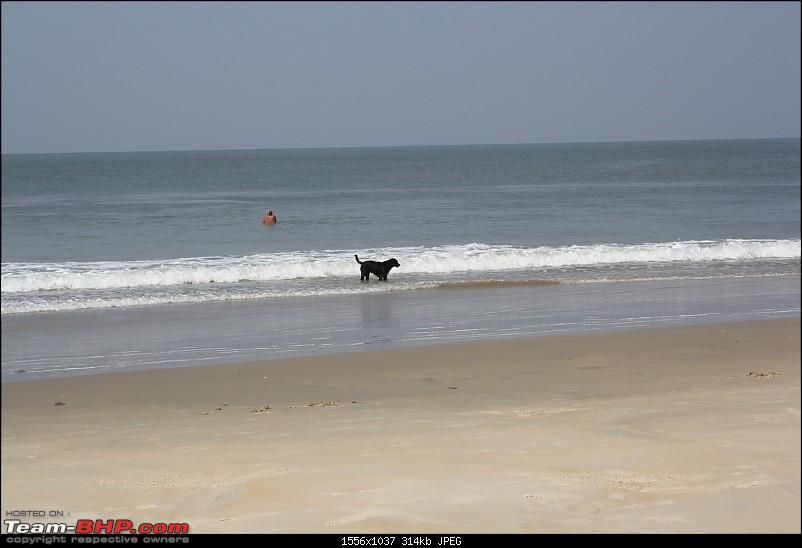 Return to Sun Surf Sand but no Sorpotel - Goa!-betal1.jpg